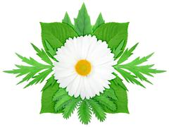 white flower with green leaf - stock photo
