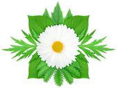 Stock Photo of white flower with green leaf