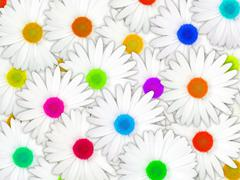 background of white flowers with motley center - stock photo