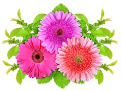 three motley flowers with green leaf - stock photo