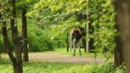 Young girl riding along the alley of city park Stock Footage