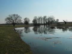 April landscape - stock photo