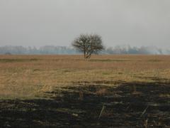 April landscape Stock Photos