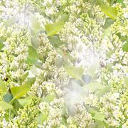 Seamless pattern of white lilac Stock Photos