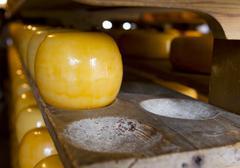 edam cheeses on cheese farm - stock photo