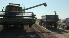 Combine harvester unloading beans into a trailer - stock footage