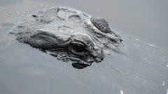Gator Eyes Stock Footage