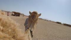 camel ride - stock footage