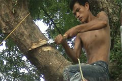 Tree cutter Stock Footage