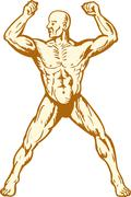 male human anatomy body builder flexing muscle - stock illustration