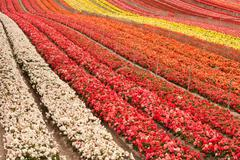 Flower Field Stock Photos