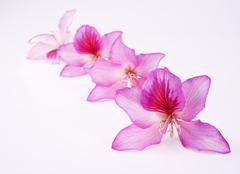 beautiful pink flowers - stock photo