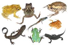 Wild animal collection amphibian Stock Photos