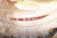 Moth wing detail Stock Photos