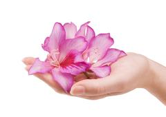 Stock Photo of female hand with flower