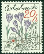 Stamp printed in CZECHOSLOVAKIA shows Crocus, circa 1979 Stock Photos