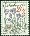Stock Photo of stamp printed in CZECHOSLOVAKIA shows Crocus, circa 1979
