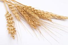 Stock Photo of wheat ears