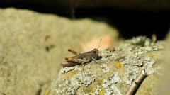 Grass hopper Stock Footage