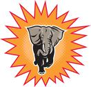 African elephant charging halftone dots Stock Illustration