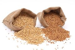 burlap sack with wheat grain and buckwheat - stock photo