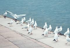 Seagulls at pier Stock Photos
