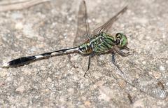 Hyönteinen sudenkorento läheltä Kuvituskuvat