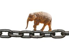 Animal elephant walking on chain Stock Photos