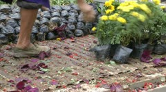 horticultural workers transport flowers - stock footage