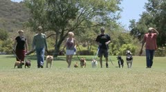 FRIENDS WALK DOGS IN PARK Stock Footage