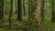 Green rainy forest Stock Footage