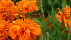 Koit ja kukkia Arkistovideo