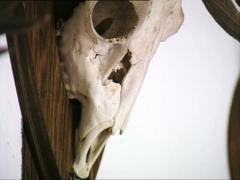DRACULA CASTLE deer skulls zoom in Stock Footage
