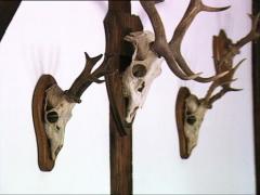 DRACULA CASTLE deer skulls zoom out Stock Footage