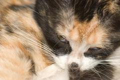 animal cat baby - stock photo