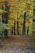autumn - stock photo