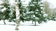 Walks in winter wood Stock Footage