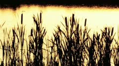 Lake at night reed Stock Footage