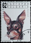 Bulgaria - circa 1991: leima - animal pet dog muotokuva Kuvituskuvat