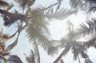 Tropical palms Stock Photos