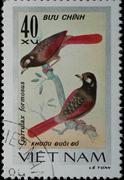 Vietnam - circa 1978:  stamp - animal songbird Stock Photos