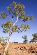 australian outback eucalyptus and outbuildings - stock photo
