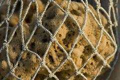 Original sea sponge from island Krapanj Stock Photos