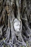 Stock Photo of famous buddha in a tree at wat mahathat, ayutthaya, thailand