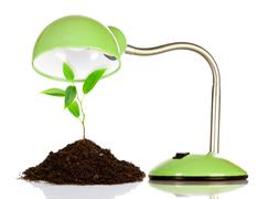 young sprout and table lamp - stock photo
