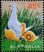 Australia stamp shows farm animal duck Stock Photos
