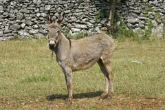 Donkey on the field - stock photo