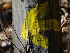 Yellow arrow on trunk Stock Photos