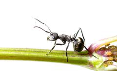 Insect ant Stock Photos
