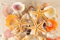 seashells group - stock photo